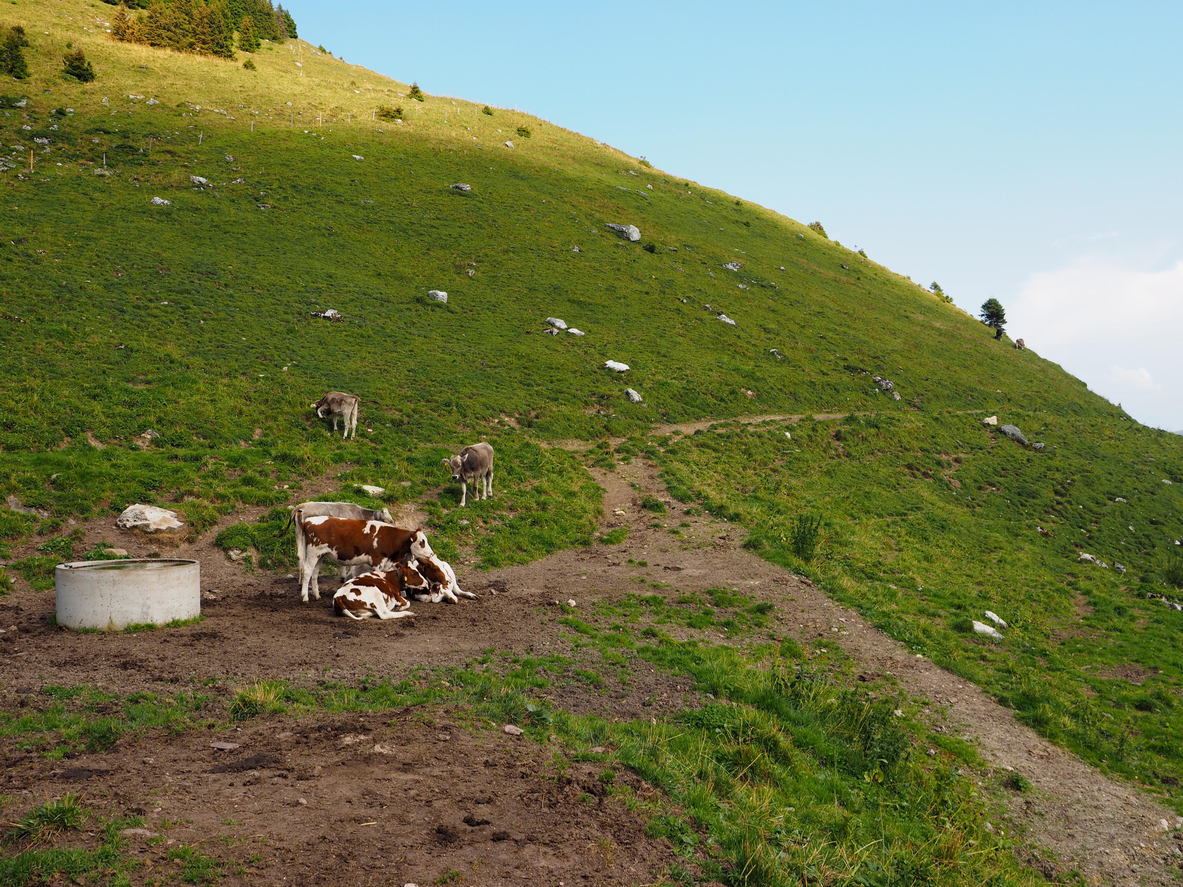 スイスのアルプ酪農