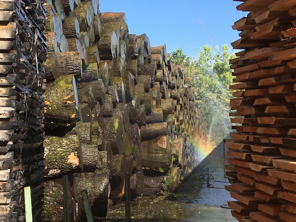 高いお金を払ってドイツから広葉樹材を輸入しなければならなくなった!
