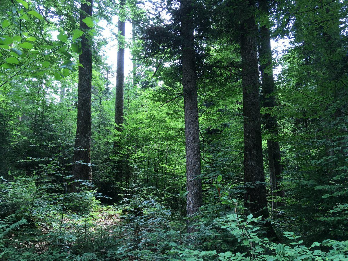 木々が人間に伝える大切なメッセージ