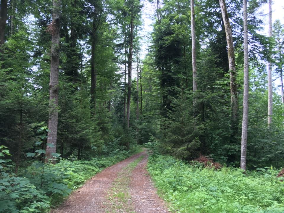 次世代への配慮と備えの心が作り出した恒続森
