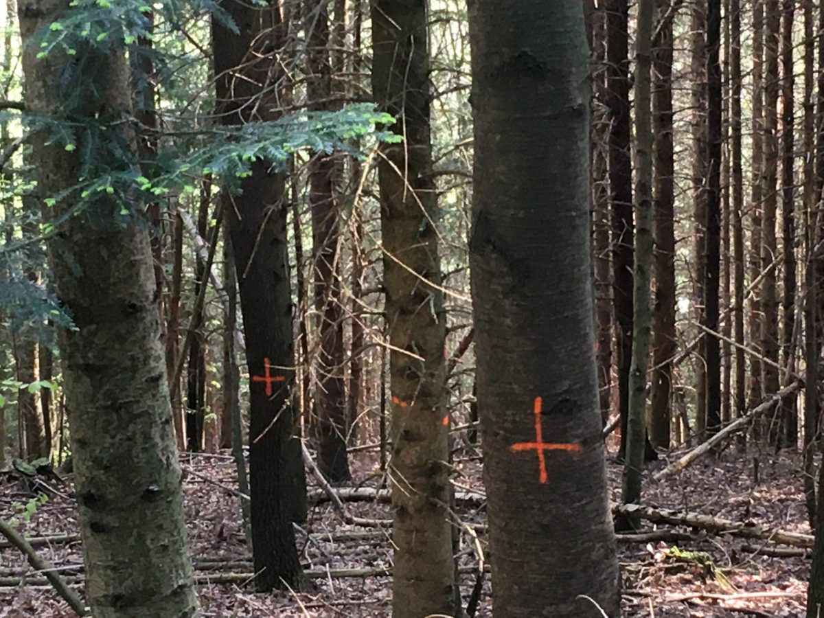 その場所の適樹が「将来の木」に!