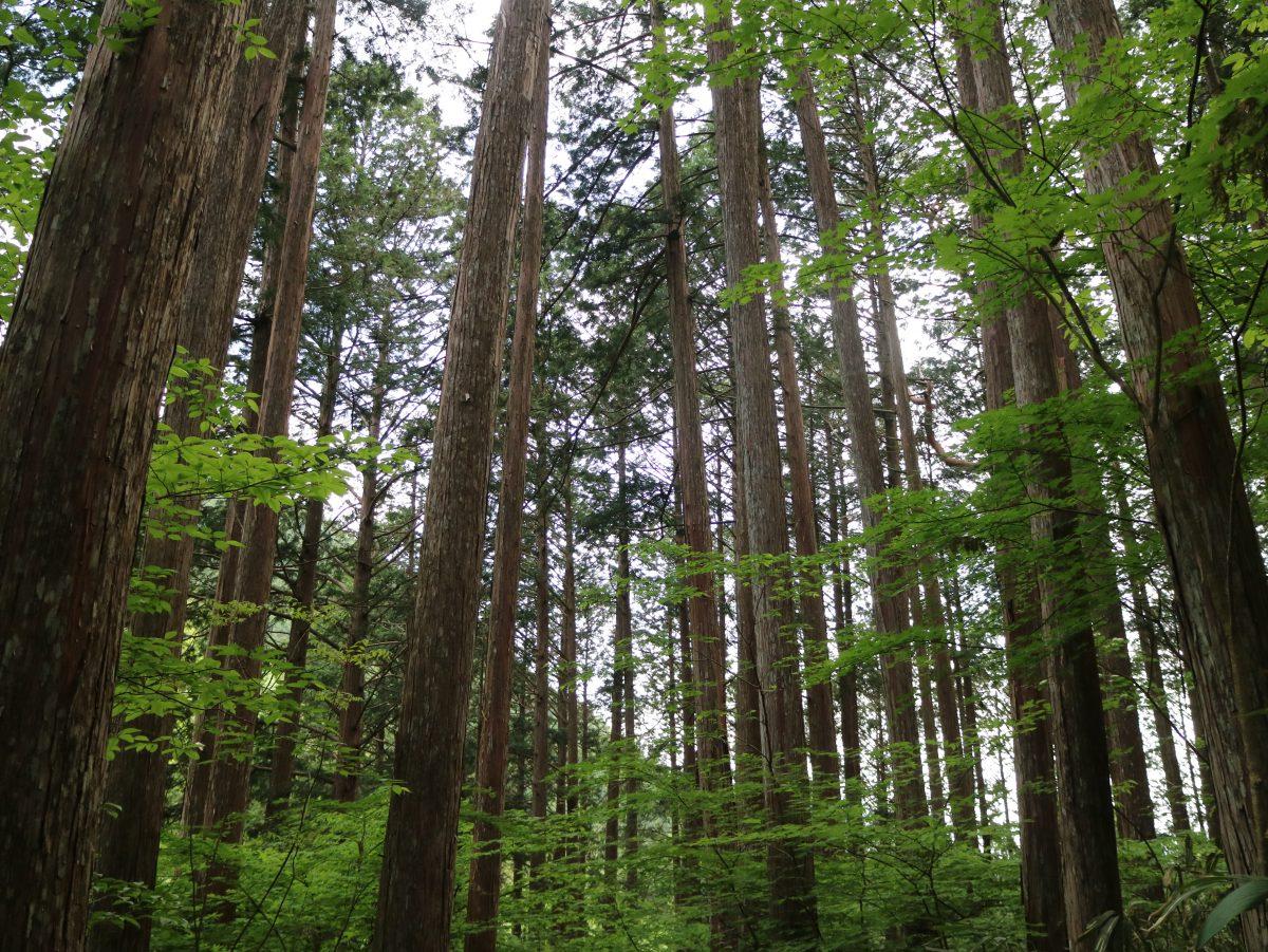 日本の森林にはとりわけ女性的な感性が必要