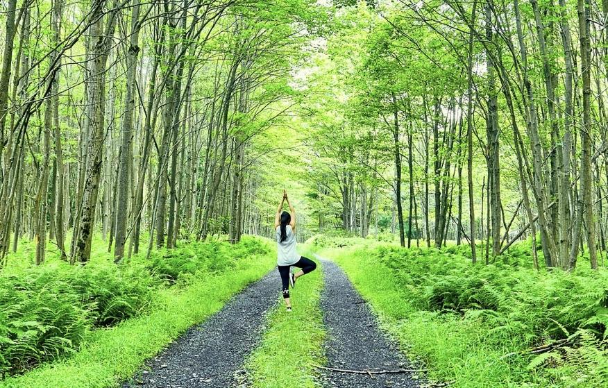 木々の「言葉」が人間を癒す
